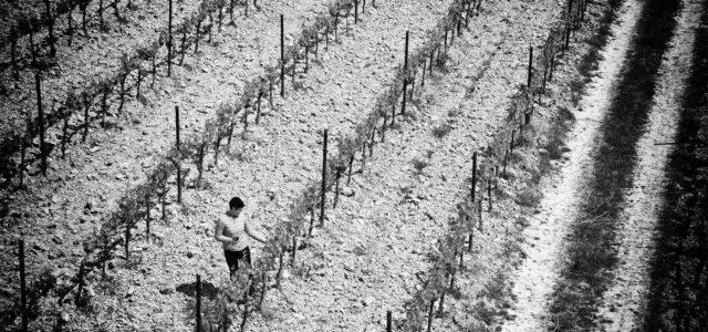 Cantina-Chiacchiera-vigne nuove